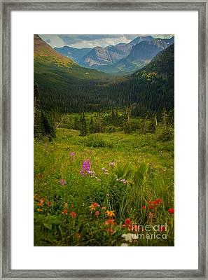 Along The Path To Iceburg Lake 17 Framed Print by Natural Focal Point Photography