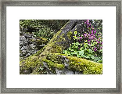 Along The Pathway Framed Print