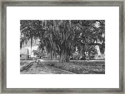 Along The River Road Near Vacherie La Framed Print