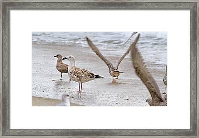 Along The Shoreline Framed Print by Betsy Knapp
