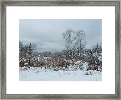 Along The Trail Framed Print by Gene Cyr