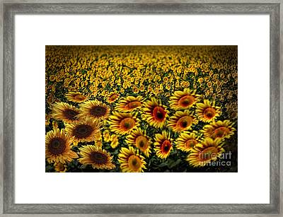 Along With The Wind Framed Print by Angelika Drake