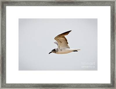 Alongside - Seagull Framed Print