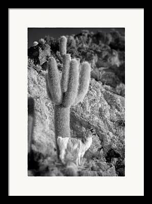 Bolivia Blog Framed Prints