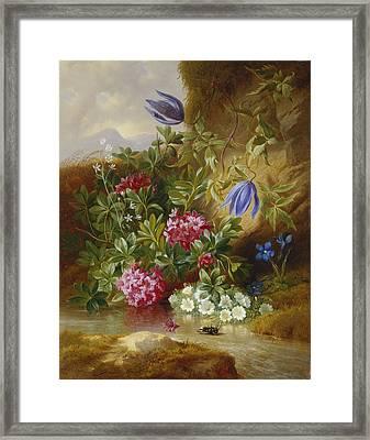 Alpenblum Framed Print by Josef Schuster