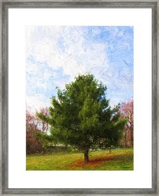 Alpha Spring Pine Framed Print