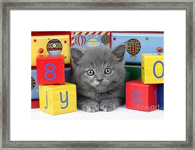 Alphabet Cat Ck415 Framed Print by Greg Cuddiford