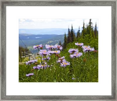 Alpine Asters Framed Print by Theresa Tahara