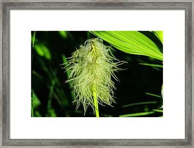 Alpine Beauty Framed Print by Jeff Swan
