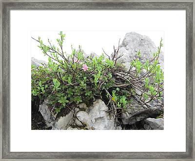 Framed Print featuring the photograph Alpine Beauty by Pema Hou