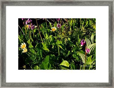 Alpine Fresh  Framed Print