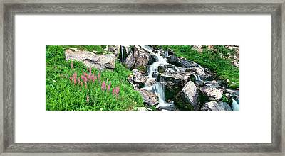 Alpine Garden Near Cascade Waterfall Framed Print