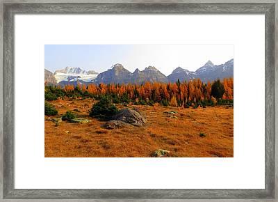 Alpine Larch Meadow Framed Print by Ramona Johnston