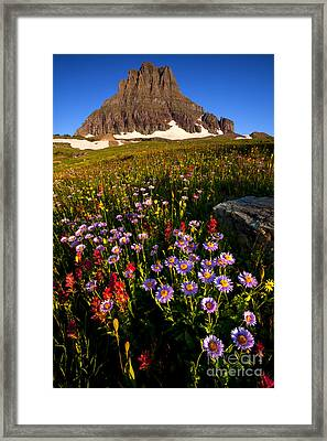 Alpine Meadow Framed Print by Aaron Whittemore