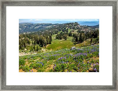Alpine Meadow Framed Print by Robert Bales