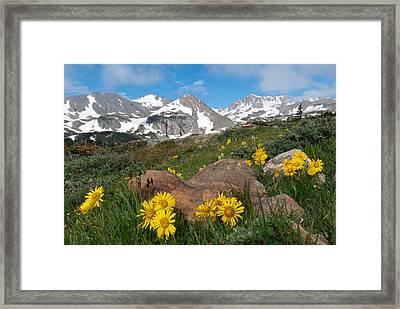 Alpine Sunflower Mountain Landscape Framed Print