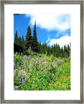 Framed Print featuring the photograph Alpine Walk by Kathy Bassett