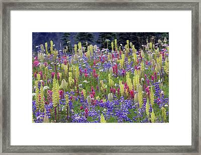 Alpine Wildflowers, Mount Rainier Framed Print