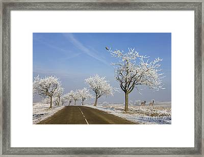 Alsace France In Winter Framed Print by Jean-Louis Klein and Marie-Luce Hubert