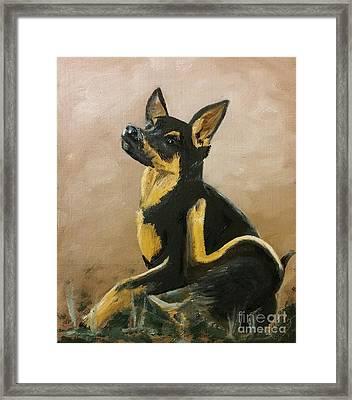 Alsatian Puppy Scratching Framed Print