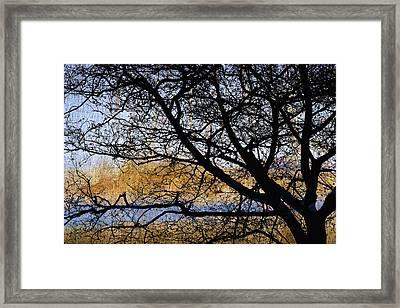 Alsea Bay Tree Framed Print by Carol Leigh