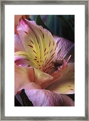Alstroemeria I Framed Print