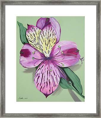 Alstroemeria No.1 Framed Print