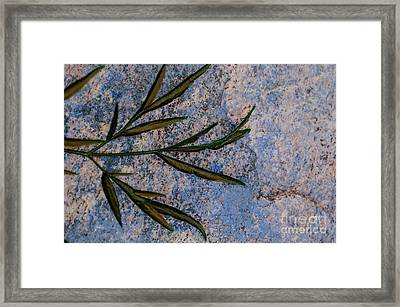 Altered State Framed Print by Judy Wolinsky