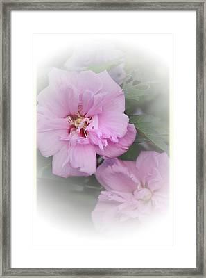 Althea Framed Print by Karen Beasley