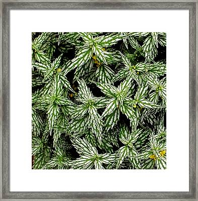 'aluminum Plant Close-up' Framed Print