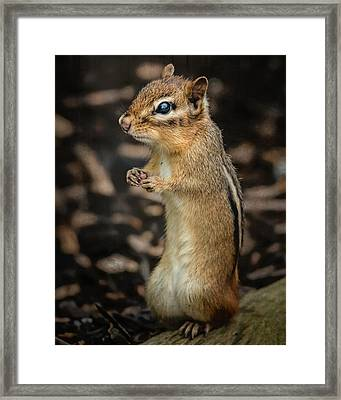 Framed Print featuring the photograph Alvin by Linda Karlin