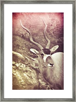 Always In The Way Framed Print by Trish Tritz