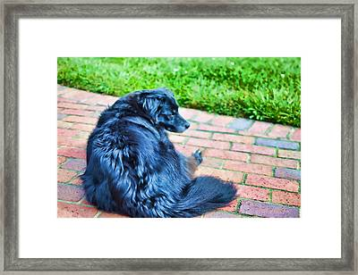 Always On Watch Framed Print