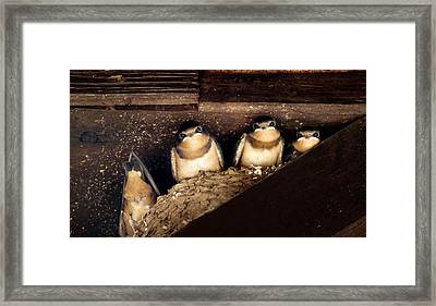 Always One In The Group Framed Print by Art Dingo