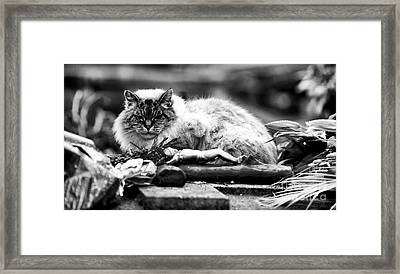 Always There Framed Print by John Rizzuto