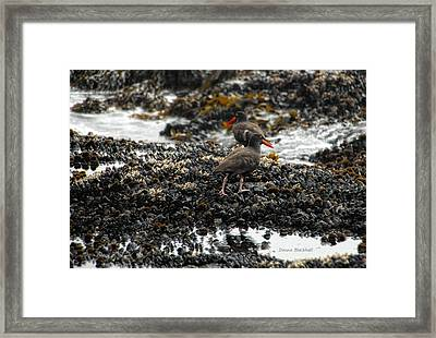 Always Walking On Shells With You Framed Print