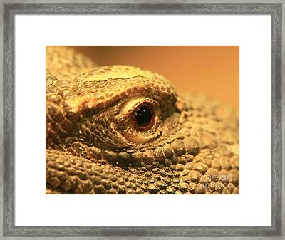 Always Watch Your Back - Benti Uromastyx Lizard Framed Print by Inspired Nature Photography Fine Art Photography