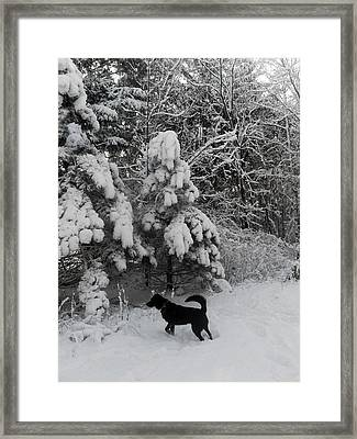 Always Watchful Framed Print