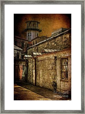 Always Watching Framed Print by Lois Bryan