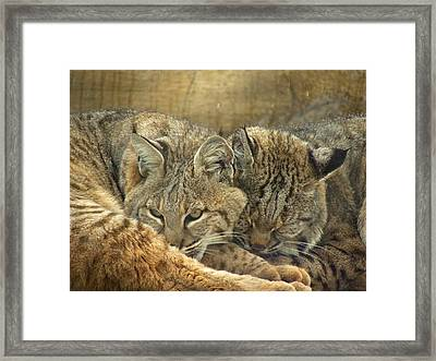 Always Watching Framed Print by Teresa Schomig