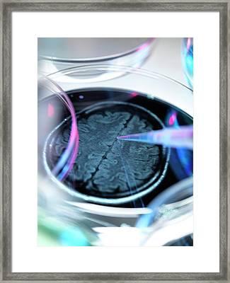 Alzheimer's Research Framed Print