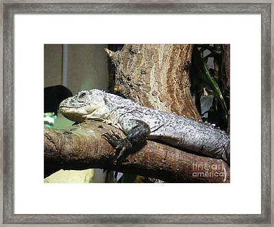Am A Reptile. Framed Print by Ann Fellows