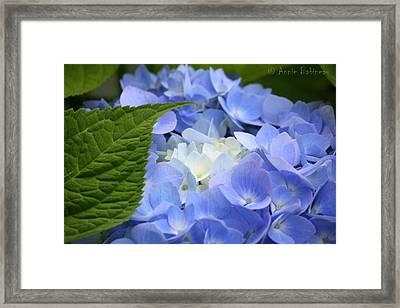 am I blue Framed Print by Anne Babineau