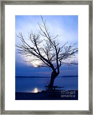 Am I Blue? Framed Print by Chris Anderson