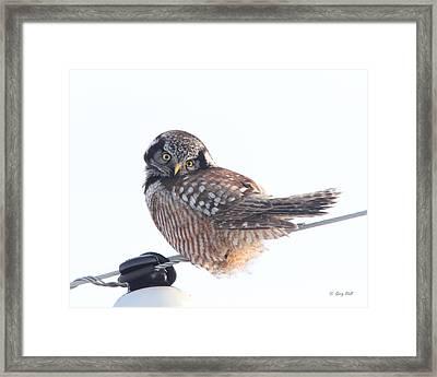 Am I Cute Framed Print by Gerry Sibell