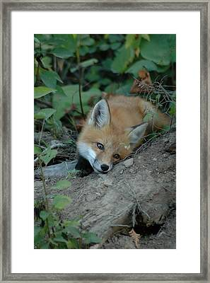 Framed Print featuring the photograph Am I Cute by Sandra Updyke