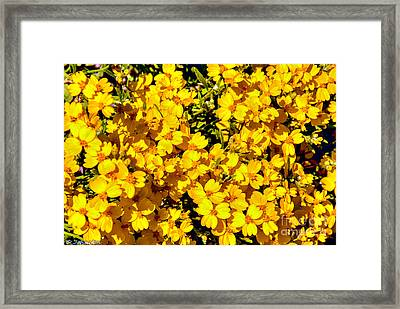 Am I Dreaming About Buttercups Framed Print by Bob and Nadine Johnston