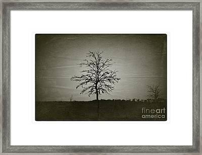 Am Trees - No.226 Framed Print