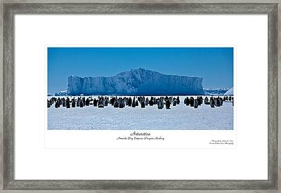 Amanda Bay Rookery Framed Print by David Barringhaus