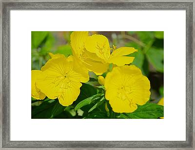 Amarillo Sunshine Framed Print by Sonali Gangane